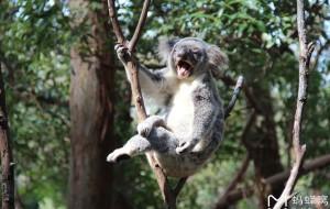 【黄金海岸图片】携老带小澳大利亚自驾之旅(墨尔本—大洋路—黄金海岸—悉尼)