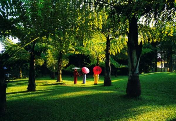 1月  风景 | 西双版纳:热带雨林 大象孔雀  这里是热带植物的王国