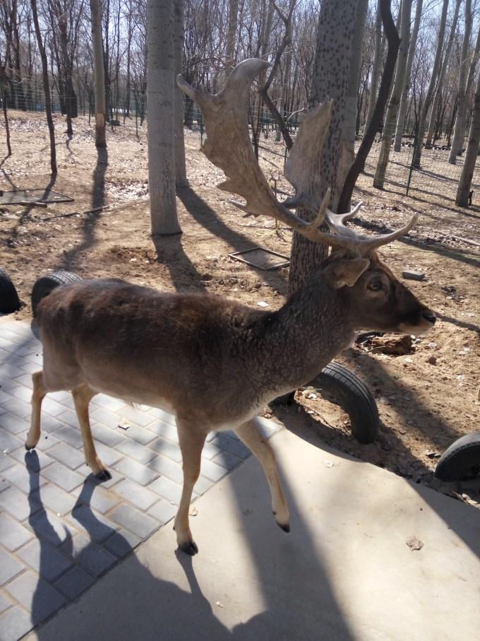 北京野生动物园-绿野晴川-大兴榆垡