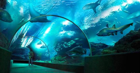 一站观赏超过400种或可爱或丑丑的海底生物