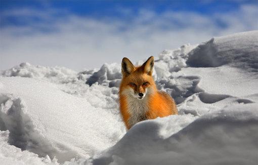木屋极光观赏+飞机飞越北极圈+珍娜矿物疗养温泉