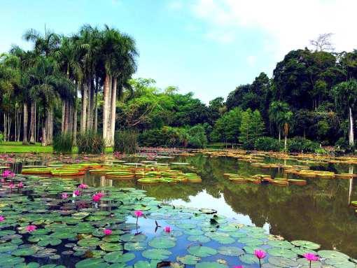 植物风景简笔画带颜色