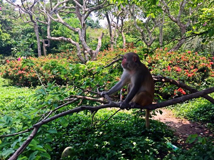 南湾猴岛生态旅游区