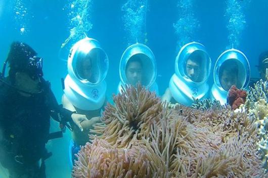 壁纸 海底 海底世界 海洋馆 水族馆 桌面 530_353