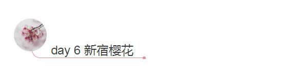 day6 新宿樱花