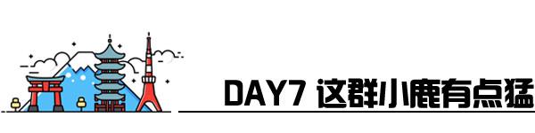 Day7 锦市场-奈良-京都拉面小路